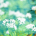 Funky White Flower Background by Rachel Duchesne