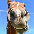 Funny Brown Horse Face by Jennie Marie Schell