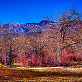 Furrowed Field At South Platte Park by David Patterson