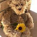Fuzzy Teddy by Lynnette Johns