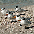 Gaggle Of Gulls by Stephen Whalen