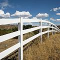 Galloping Fence by Peter Tellone