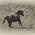 Galloping Horse by Bill Cannon