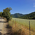 Galls Creek Road In Southern Oregon by Mick Anderson