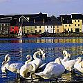 Galway City, County Galway, Ireland by The Irish Image Collection