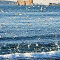 Gannets In Flight And Perce Rock by Yves Marcoux
