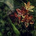 Garden Abstract 6 by Charles Garrett