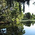 Garden At Magnolia Plantation by Barbara Saccente