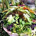 Garden Bowl Of Foliage by Elaine Plesser