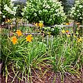 Garden Delight by Madeline Ellis