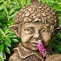 Garden Elf 2 by Douglas Barnett