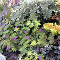 Garden Flower Border by Elaine Plesser