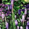 Garden Flowers 1 by Pol Ledent