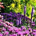 Garden Flowers 3 by Pol Ledent