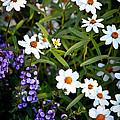 Garden Flowers by Steve McKinzie