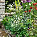 Garden Flowers With Stream by Simon Bratt Photography LRPS