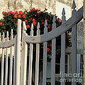 Garden Gate by Lainie Wrightson