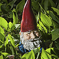 Garden Gnome No 0065 by Randall Nyhof