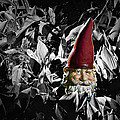 Garden Gnome With Gray Background by Randall Nyhof