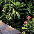 Garden  by Melissa  Hardiman