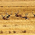 Garden Of Elk by Eric Tressler