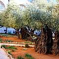 Garden Of Gethsemane by Philip Neelamegam