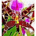 Garden Orchid by Mindy Newman