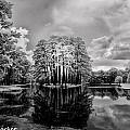 Garden Pond - Infrared by Bill Barber