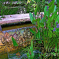 Garden Pond by Herb Paynter