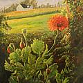 Garden Poppies by Lorraine Vatcher