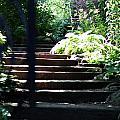 Garden Stairs by Lauren Nicholson