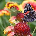 Garden Svengali by Bill Pevlor