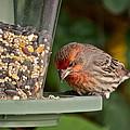 Garden Visitor by Diana Hatcher