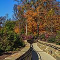 Garden Walk Way by Wanda J King