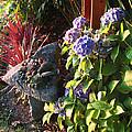 Garden Zen Art by Kym Backland