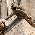 Gargoyles On Ely Cathedral by Andrew  Michael