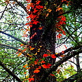 Garland Of Autumn by Karen Wiles