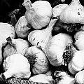 Garlic by David Resnikoff
