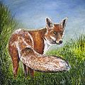 Gazing Fox by Karen Copley