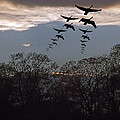 Geese At Dusk by Brian Wallace