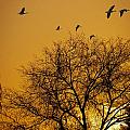 Geese At Sunrise by Jay Hooker