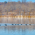 Geese In The Schuylkill River by Bill Cannon