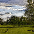 Geese On Painted Green 2 by Bill Tiepelman