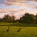 Geese On Painted Green by Bill Tiepelman