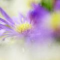Gentle Bliss by Jenny Rainbow