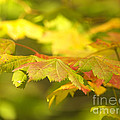 Gentle Glow by Sharon Talson