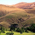 Gentle Rolling Hills by Laurel Talabere