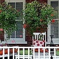 Geranium Good Times 2 by Living Color Photography Lorraine Lynch
