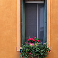 Geraniums In A Yellow Window In Treviso Italy by Greg Matchick