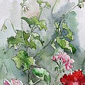 Geraniums by Stephanie Aarons